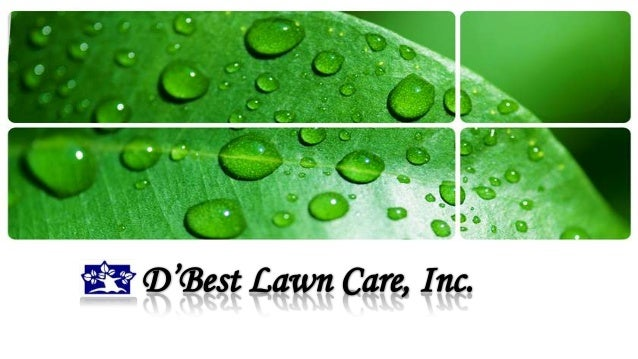 Complete Ground Maintenance Programs • Pruning • Tree Cleaning & Removal • Palm Cleaning & Removal • Lawn Maintenance • In...