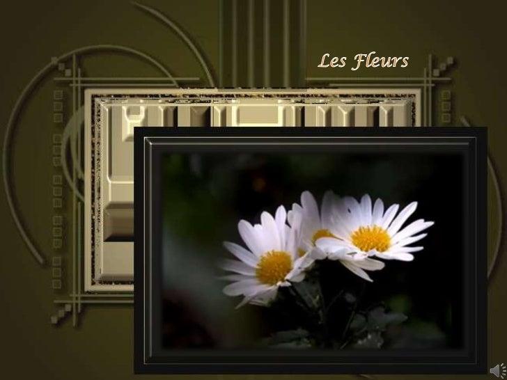 Les Fleurs<br />