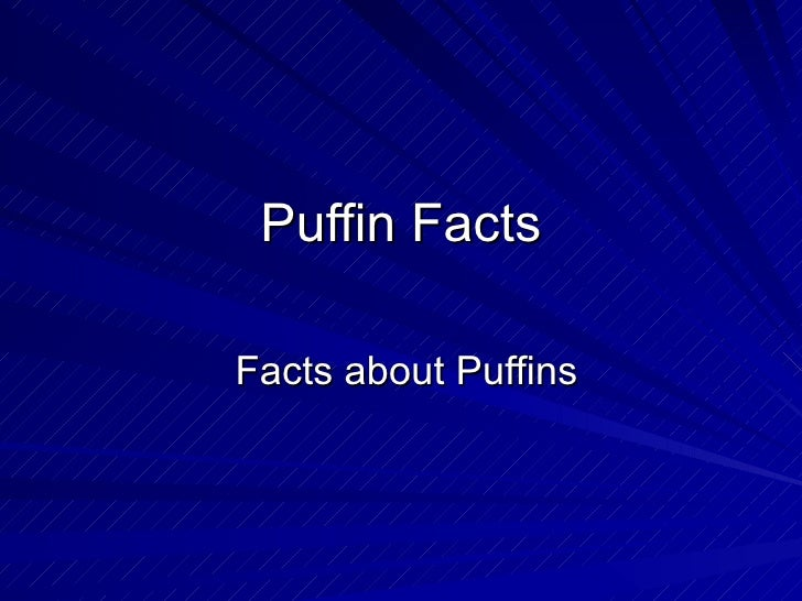 Puffin Facts Facts about Puffins