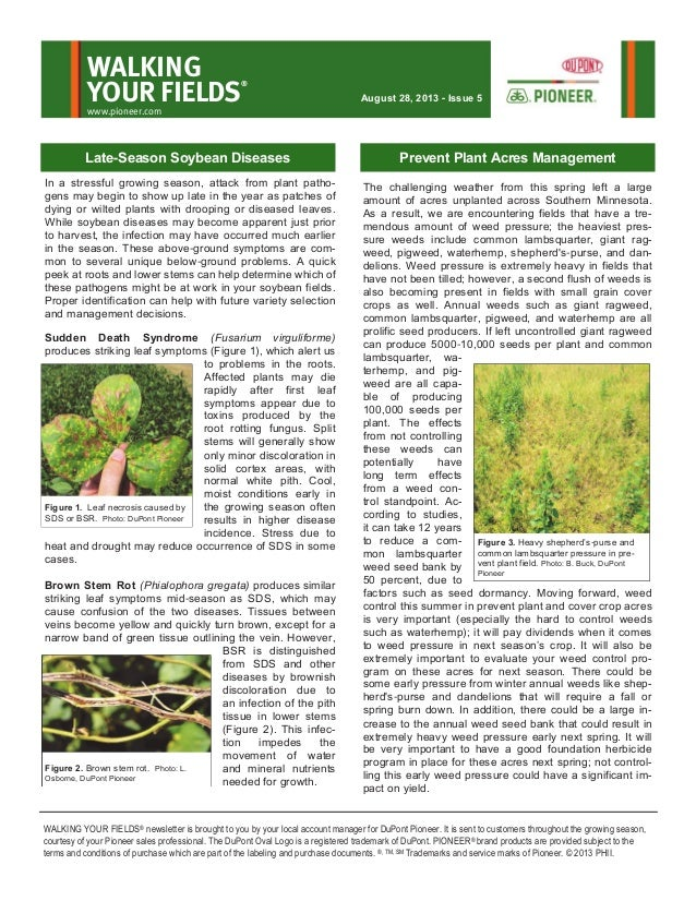 Eastern MN Walking Your Fields newsletter-Aug