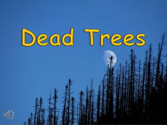 Dead trees (v.m.)