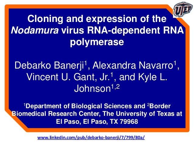 Cloning and expression of theNodamura virus RNA-dependent RNApolymeraseDebarko Banerji1, Alexandra Navarro1,Vincent U. Gan...