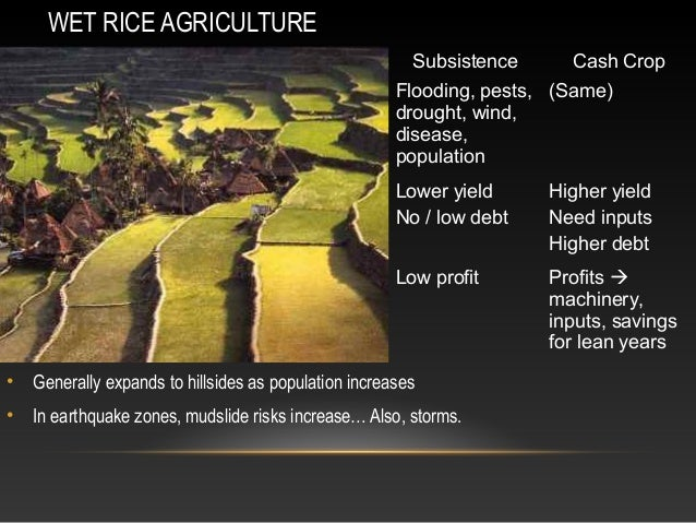 Agriculture Rice Wet Rice Agriculture