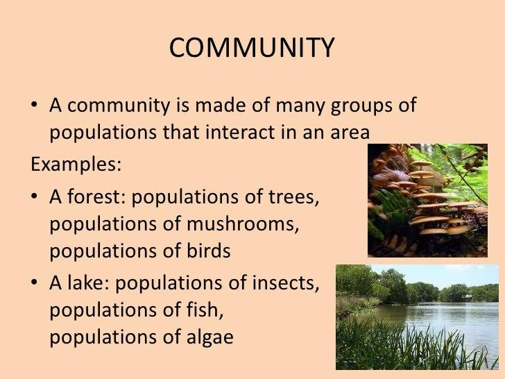 Animal Community Examples