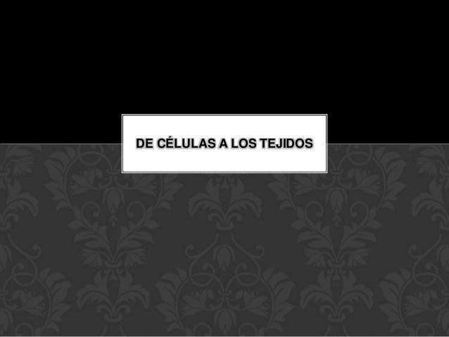 DE CÉLULAS A LOS TEJIDOS