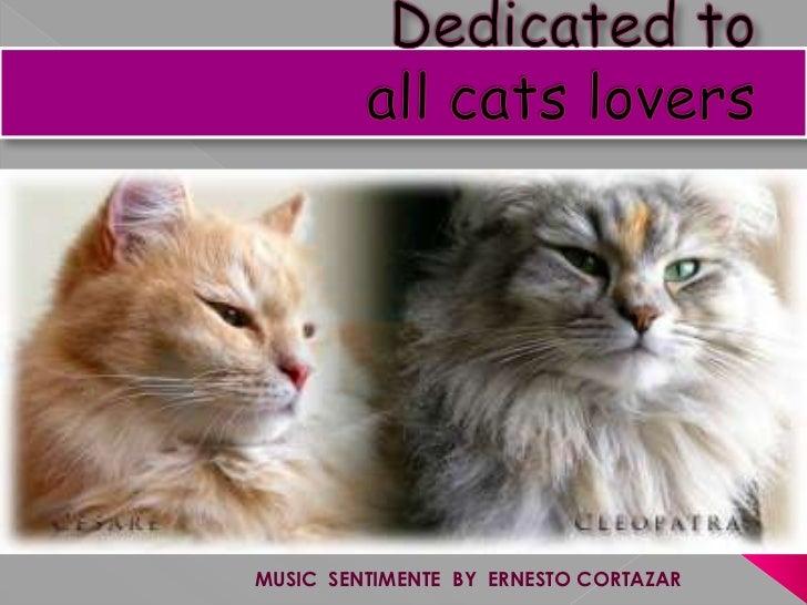 Dedicated to allcatslovers<br />על ידי הרמינה<br />MUSIC  SENTIMENTE  BY  ERNESTO CORTAZAR<br />