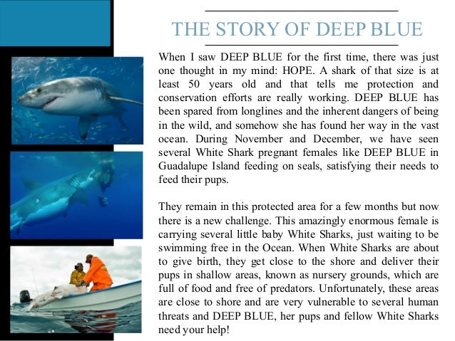 THE STORY OF DEEP BLUE When I saw DEEP BLUE for the first time, there was just one thought in my mind: HOPE. A shark of th...