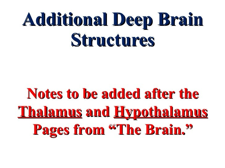 "Additional Deep Brain Structures Notes to be added after the  Thalamus  and  Hypothalamus Pages from ""The Brain."""