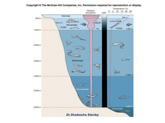 deep sea adaptations Adaptations to hydrostatic pressure in protein structure and organic osmolytes  in deep-sea animals paul h yancey1 1biology department, whitman.