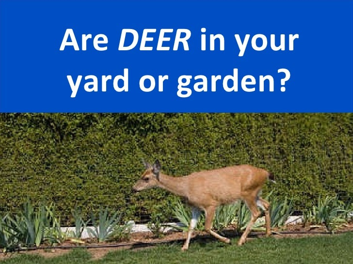 Are  DEER  in your yard or garden?