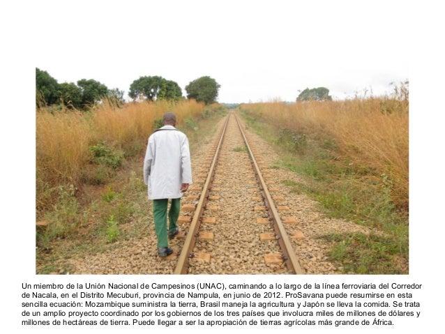 Un miembro de la Unión Nacional de Campesinos (UNAC), caminando a lo largo de la línea ferroviaria del Corredorde Nacala, ...