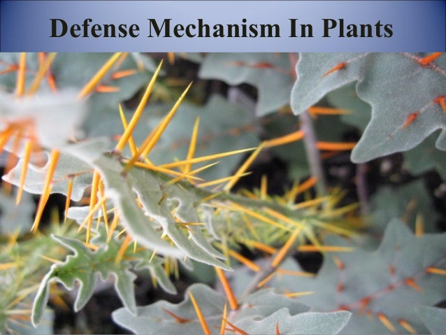 Defense Mechanism In Plants