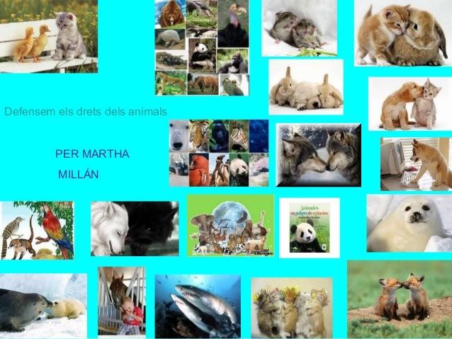 Defensem els drets dels animals PER MARTHA MILLÁN