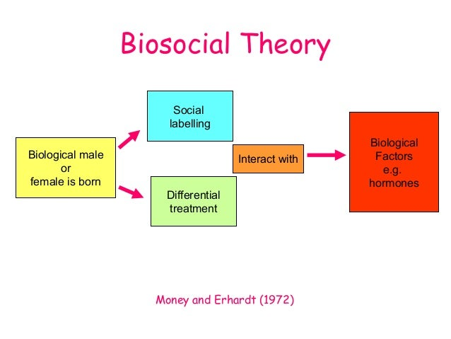 discuss biological explanations of gender development Gender and development: explanations here are neither comprehensive nor definitive sex and gender sex refers to the biological characteristics that.