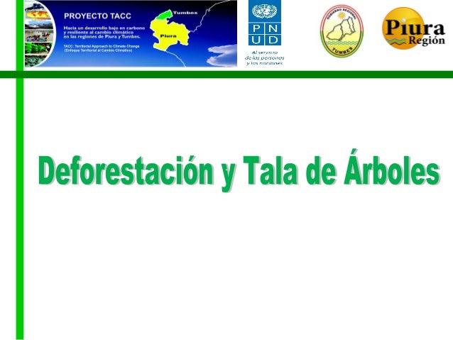 Deforestación y Tala de Arboles Piura-Tumbes