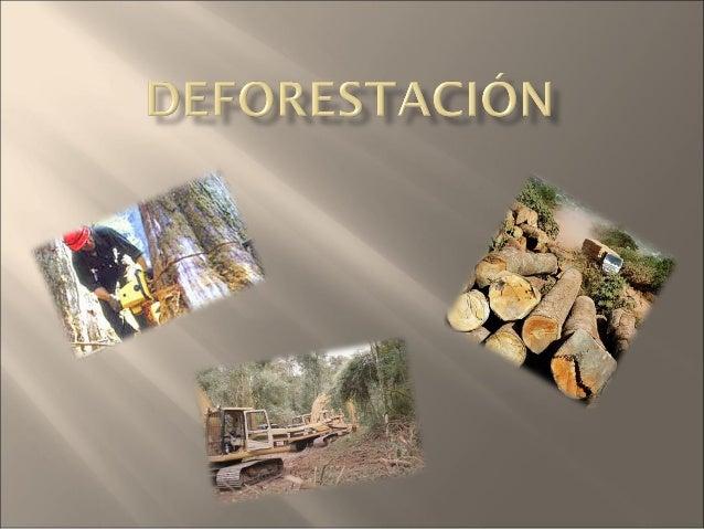   Según el Programa de las Naciones Unidas para el Medio Ambiente (PNUMA). Se entiende por deforestación el desmonte t...