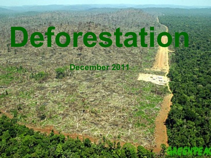 is deforestation out of control essay