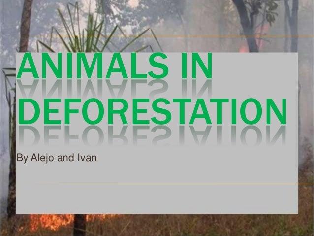 Deforestation alejo and ivan