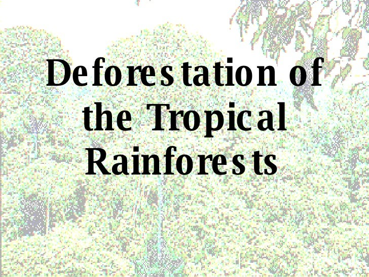 Deforestation of the Tropical Rainforests
