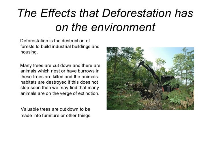 an introduction to the deforestation and the effects that it has on the environment Deforestation effects researchers think that this was the result of large-scale deforestation, over-harvesting/over-hunting, and the introduction of the rat.