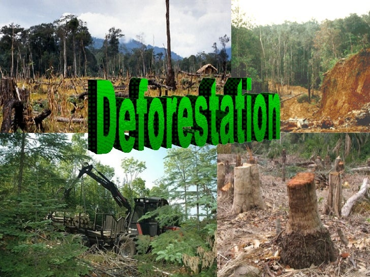 essays on afforestation and deforestation
