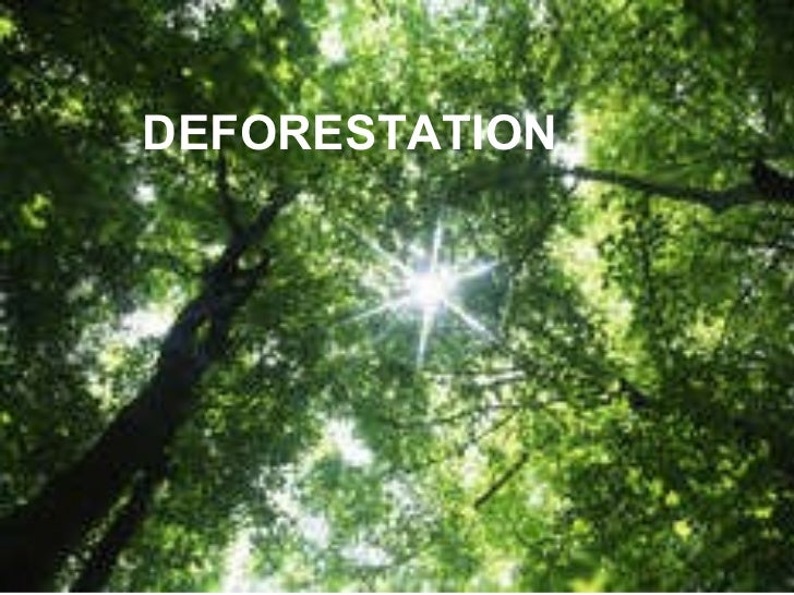 By Billy and Stuart DEFORESTATION
