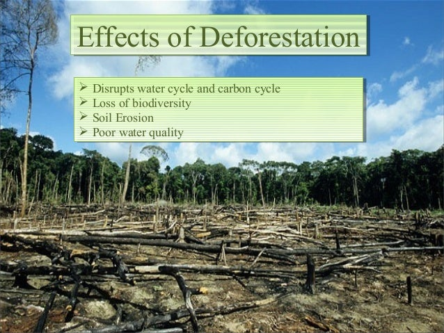 deforestation cause and effects Free essay: there are thousands of species in the sumatra forest who are being affected by deforestation many of the food and products used today contribute.