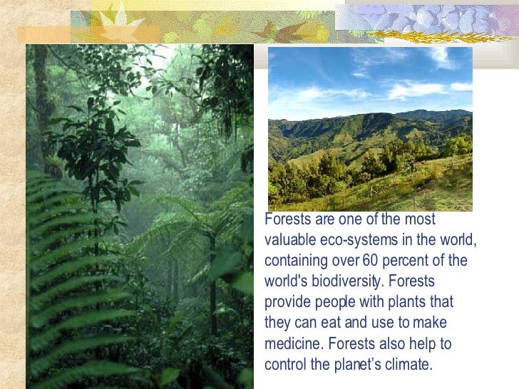 Forests are one of the most valuable eco-systems in the world, containing over 60 percent of the world's biodiversity. For...