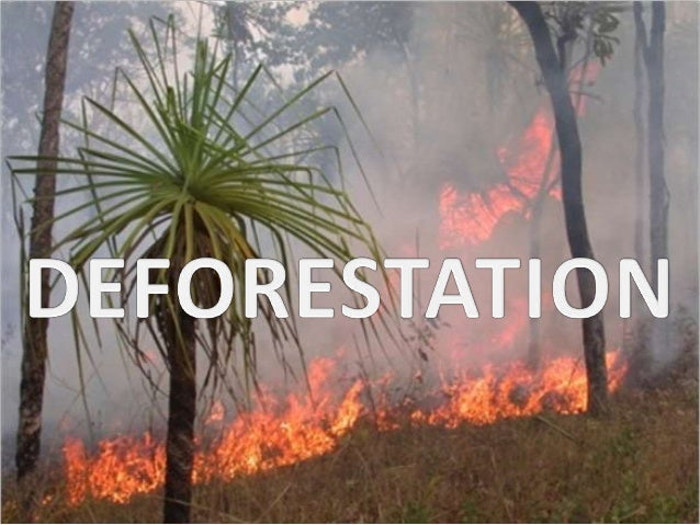 Deforestation group work