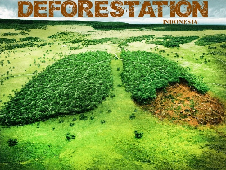 essay on deforestration Sample synthesis essay on deforestation discusses the causes of deforestation, it damage to environment, and possible measure that can be taken to prevent it.
