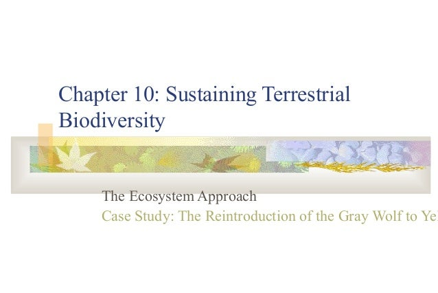 Chapter 10: Sustaining TerrestrialBiodiversity     The Ecosystem Approach     Case Study: The Reintroduction of the Gray W...