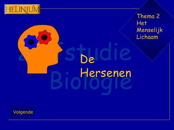 Thema 2 Het  Menselijk Lichaam De Hersenen