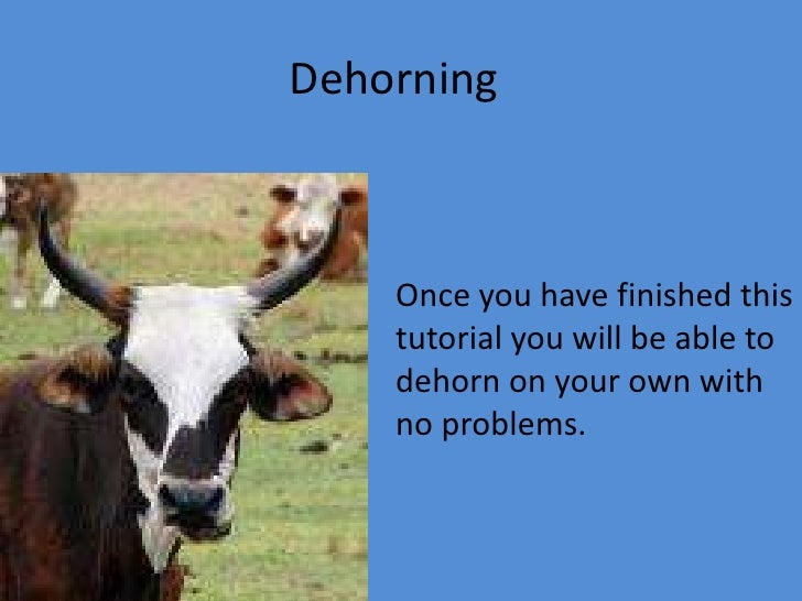 Dehorning<br />Once you have finished this tutorial you will be able to dehorn on your own with no problems.<br />