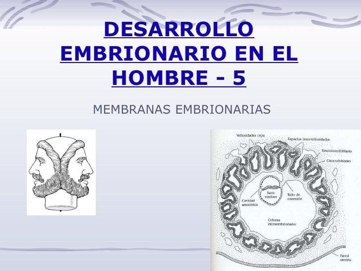 DESARROLLO EMBRIONARIO EN EL HOMBRE - 5 MEMBRANAS EMBRIONARIAS