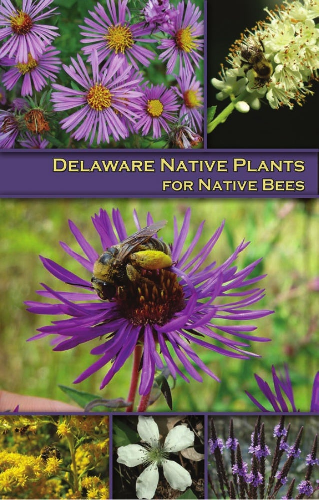 Delaware Native Plants for Native Bees