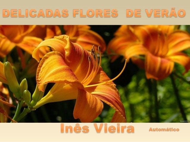 Delicadas flores de verao
