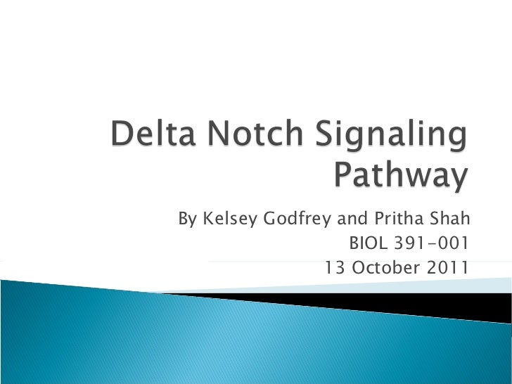 Delta Notch