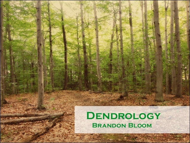 !  Dendrology Brandon Bloom