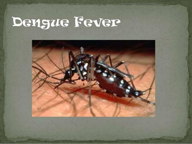 Dengue fever slide