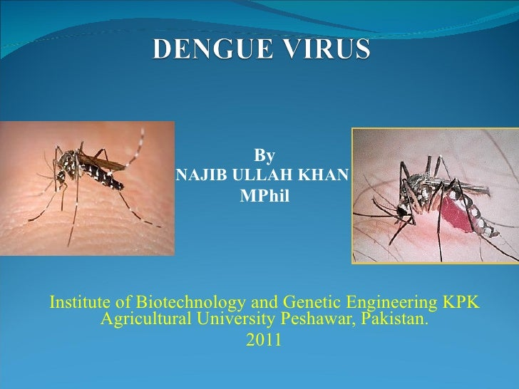 By NAJIB ULLAH KHAN  MPhil Institute of Biotechnology and Genetic Engineering KPK Agricultural University Peshawar, Pakist...