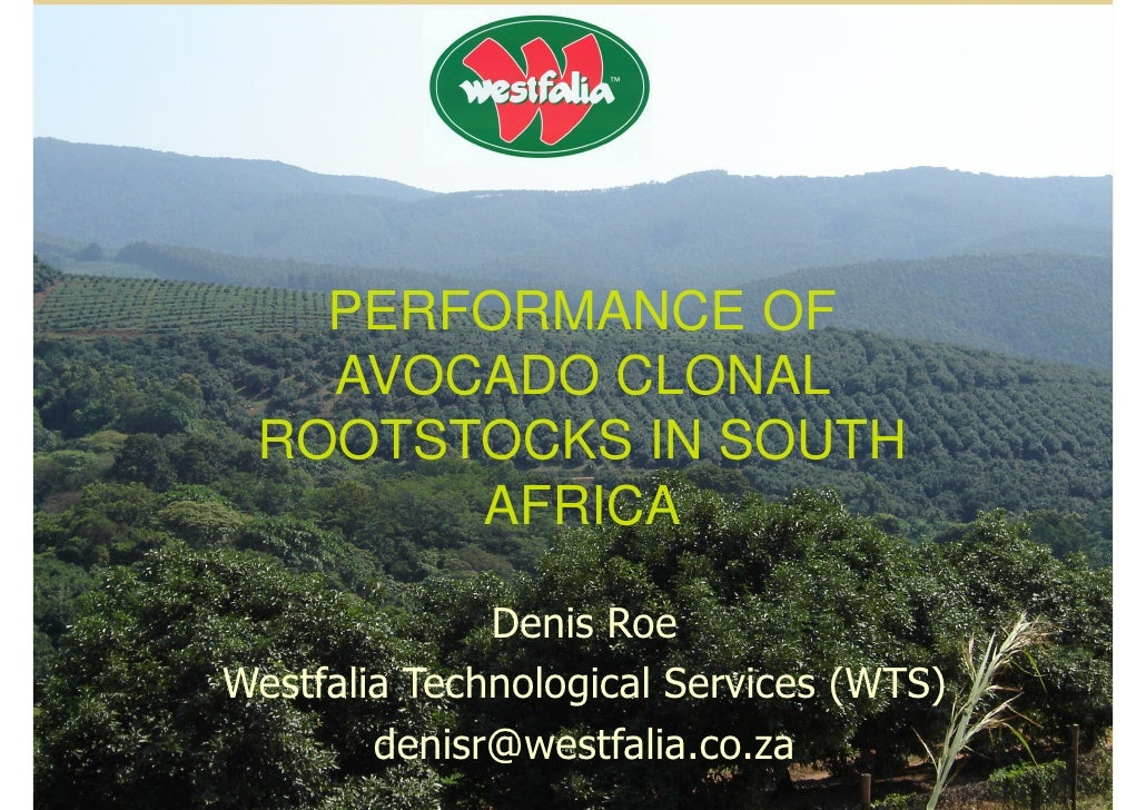PERFORMANCE OF    AVOCADO CLONAL  ROOTSTOCKS IN SOUTH        AFRICA                Denis Roe Westfalia Technological Servi...