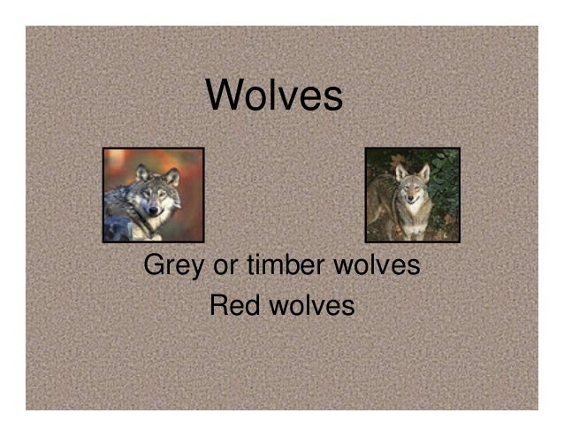 Wolves Grey or timber wolves Red wolves