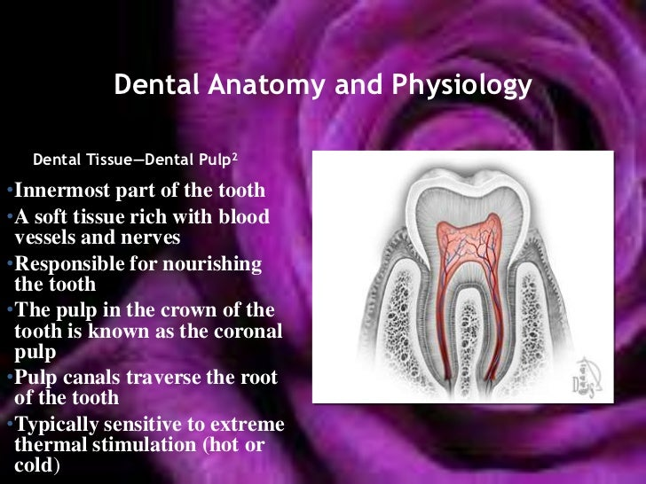 Wheelers dental anatomy