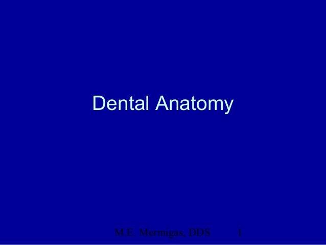 M.E. Mermigas, DDS 1Dental Anatomy