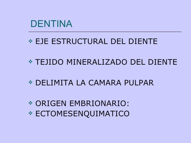 DENTINA <ul><li>EJE ESTRUCTURAL DEL DIENTE </li></ul><ul><li>TEJIDO MINERALIZADO DEL DIENTE </li></ul><ul><li>DELIMITA LA ...