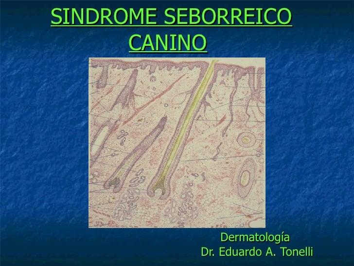 SINDROME SEBORREICO   CANINO   Dermatología  Dr. Eduardo A. Tonelli