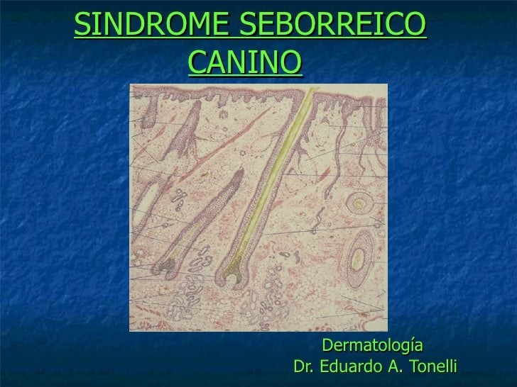 Dermatatologia Sindrome Seborreico Canino