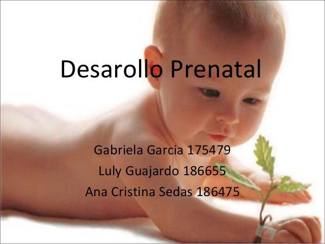 Desarollo Prenatal Gabriela Garcia 175479 Luly Guajardo 186655 Ana Cristina Sedas 186475