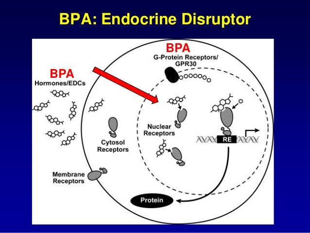 role of bisphenol a affecting fetal development Fetal exposure to bisphenol a, as well as to the widely marketed alternative   and measurable changes in the development of a brain region that plays a key  role in  but bisphenol s equally affects neurodevelopment, they.