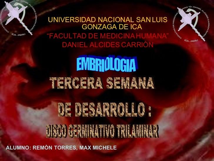 TERCERA SEMANA  DE DESARROLLO : DISCO GERMINATIVO TRILAMINAR ALUMNO: REMÒN TORRES, MAX MICHELE UNIVERSIDAD NACIONAL SAN LU...